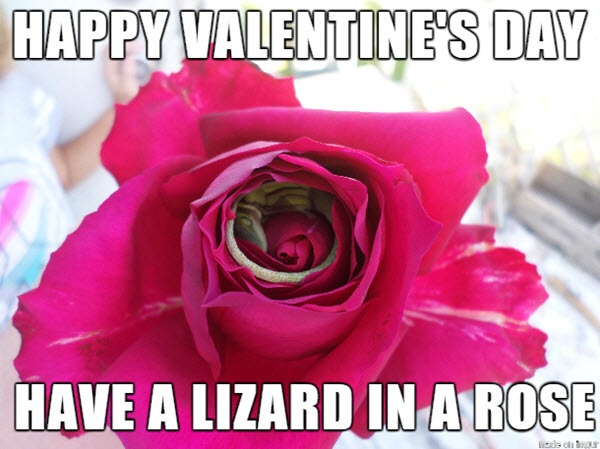 Happy Valentines Day 2021 Memes