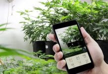 Best Apps for Cannabis Growing