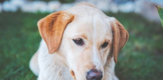 Most Famous Dog Breeds 2021